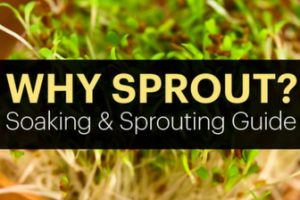 Soaking & Sprouting - HOW-TO Guide